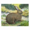 Scheibenauflage Kaninchen  33,5 cm x 39 cm